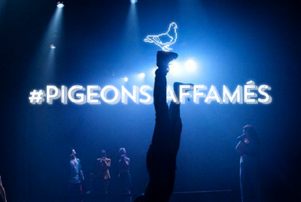 pigeons affames